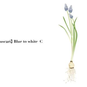 flower004-03