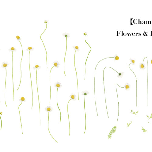 flower007-01