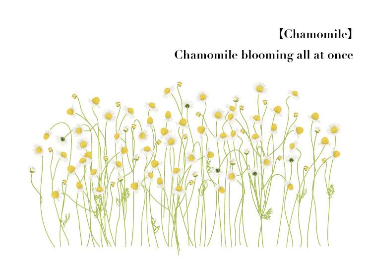 Flower007-06
