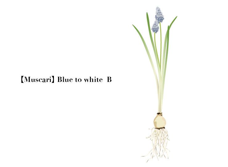 flower004-02