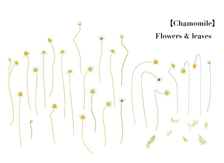 Flower007-02
